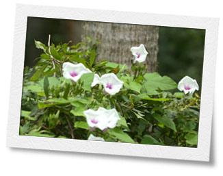 Plant life near Fenholloway River